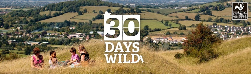 30 days of wild 2016 contents