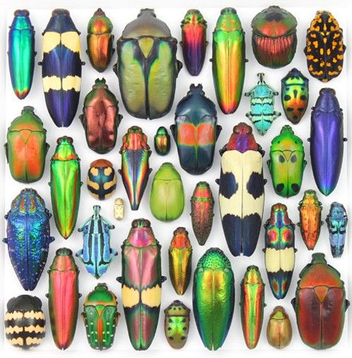 Day 11-An inordinate fondness forbeetles