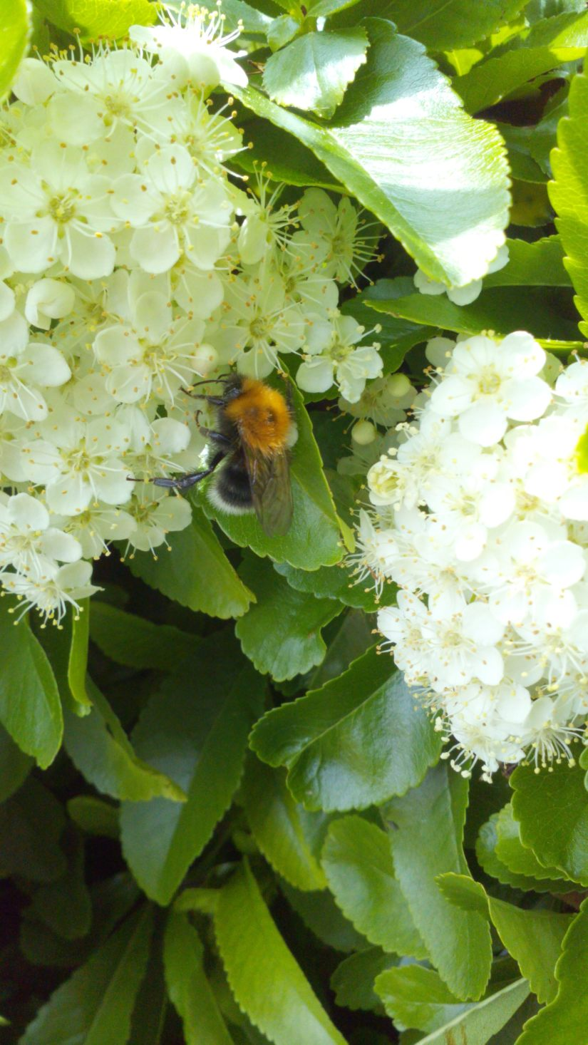 Day 19-Bee happy