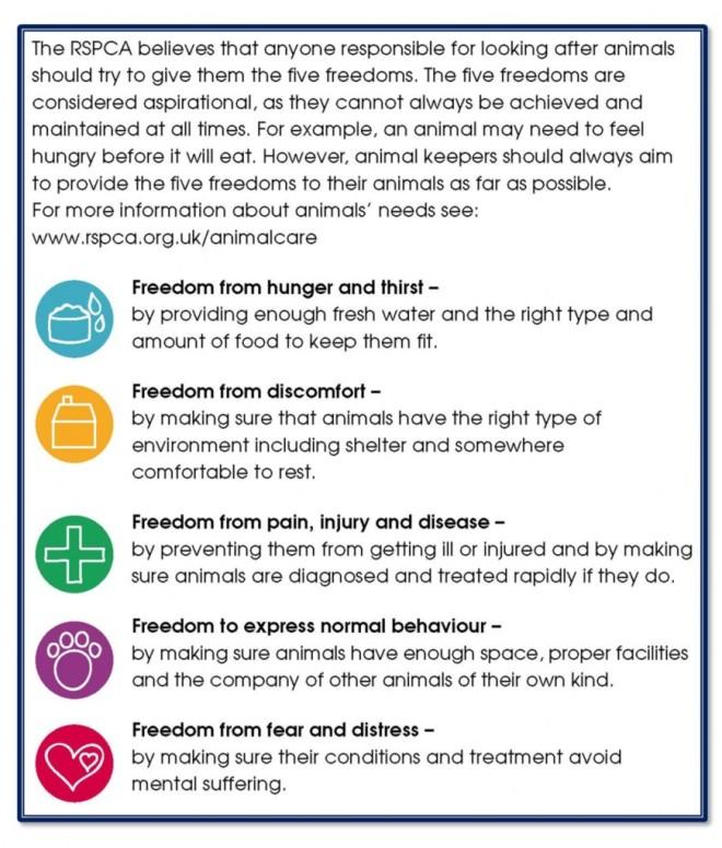 RSPCA-5-Freedoms