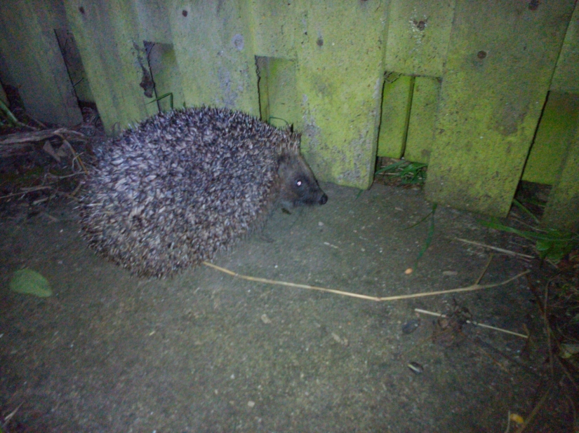 Hedgehog Home Survey