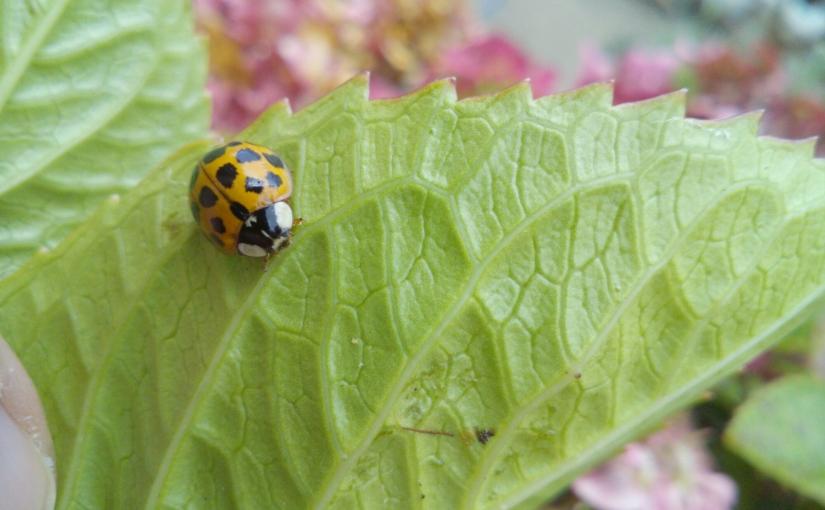 Ladybird, ladybird fly awayhome.