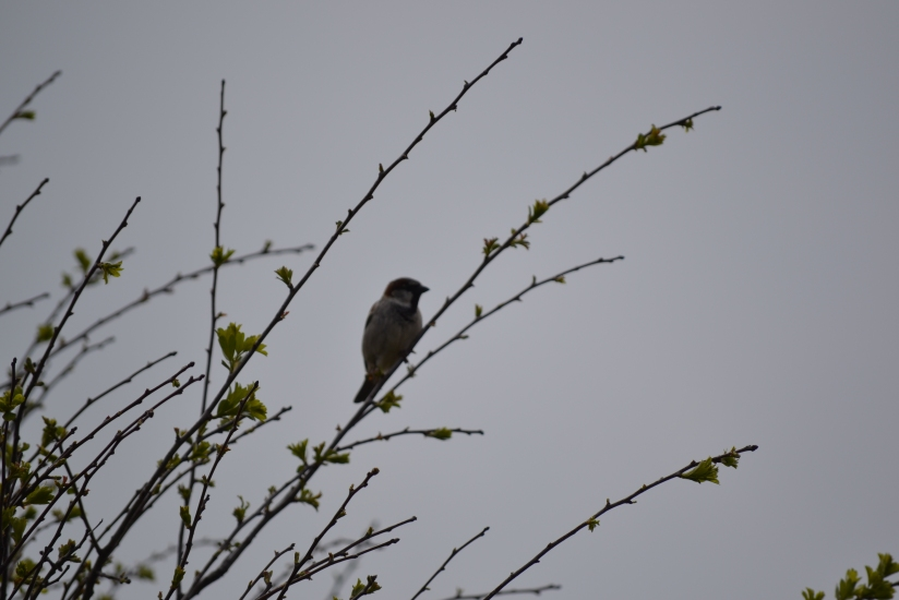 International Dawn Chorus Day