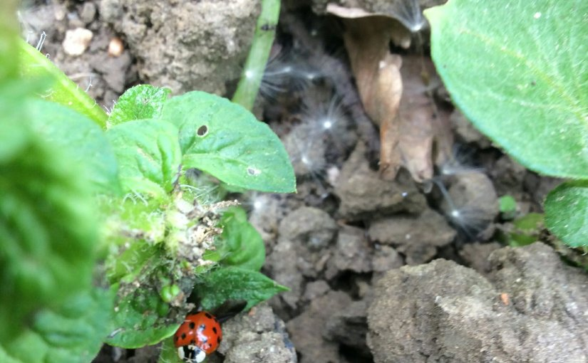 Ladybirds and caterpillars