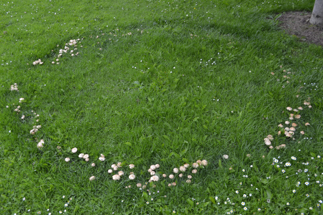 Haiku for fairy rings