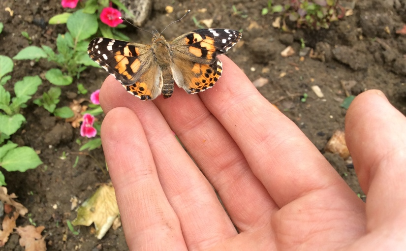 30 days of wild: day 5 return to school, release the butterflies