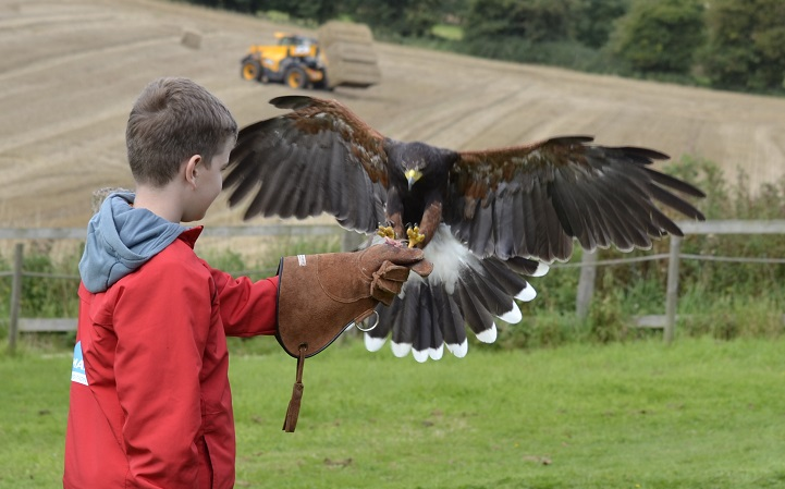 Summer Falconry School