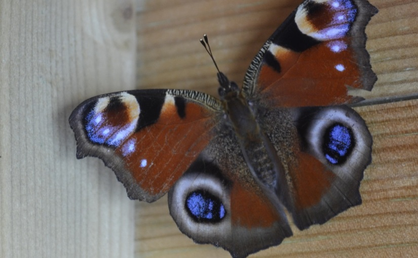 The last butterfly of theyear