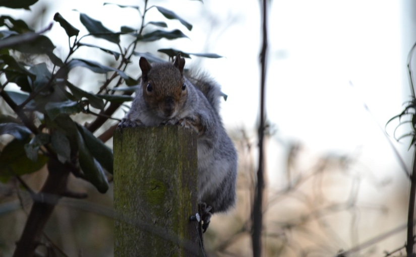 Folklore Thursday- squirrels