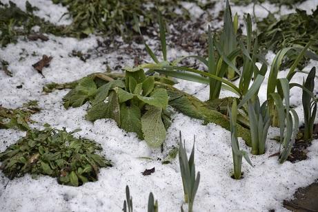 Edward Thomas-Spring thaw