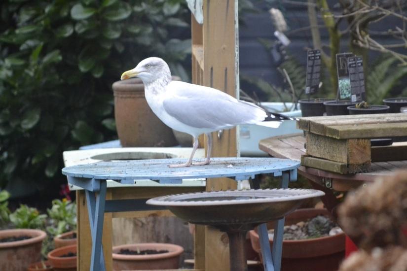 Big Garden Birdwatch: Theresults