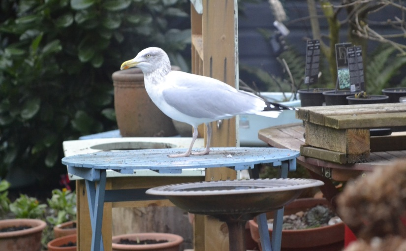 Big Garden Birdwatch: The results