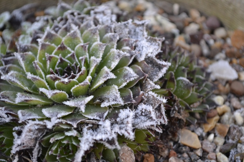 Six on Saturday 2.2.19Frost