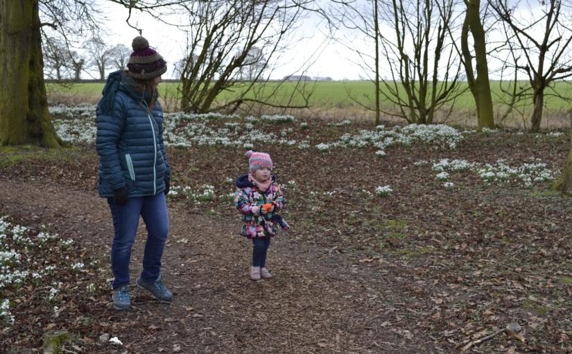 Burton Agnes-Snowdrop walk