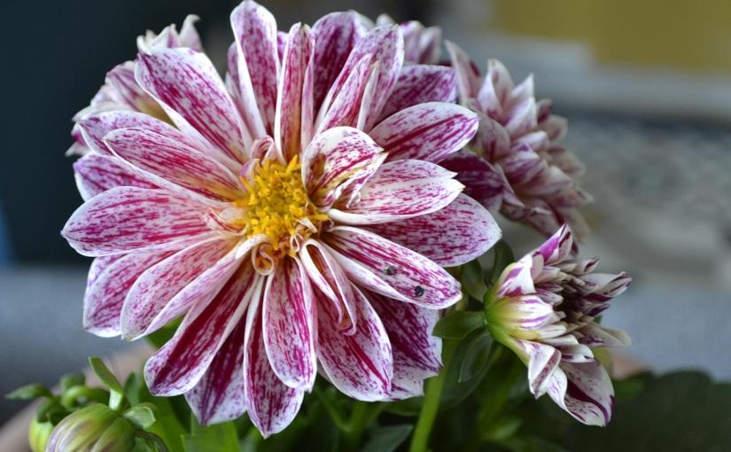 Six on Saturday: 18.5.19 Plant fairBargains