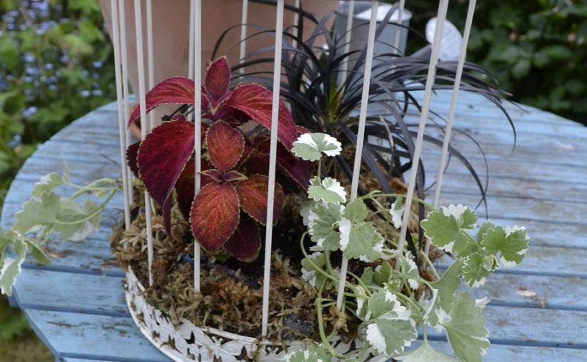 Front garden update