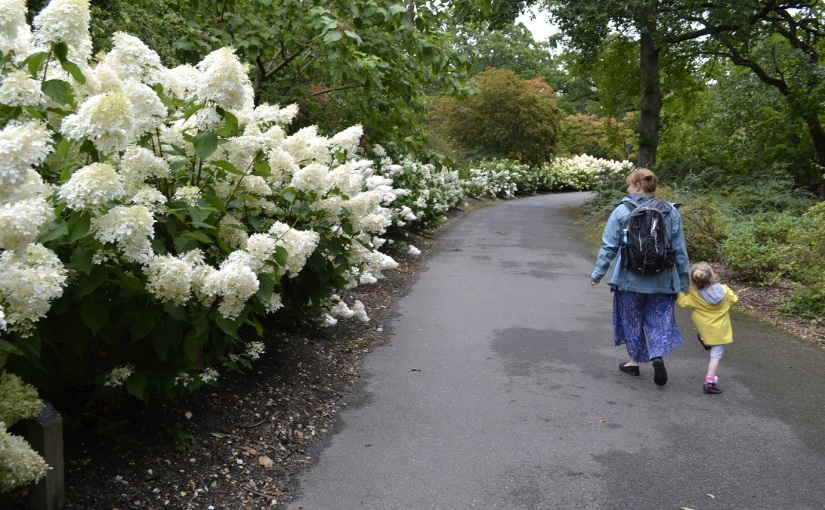 Six on Saturday: 17.8.19 Exbury Gardens Hydrangeas galore