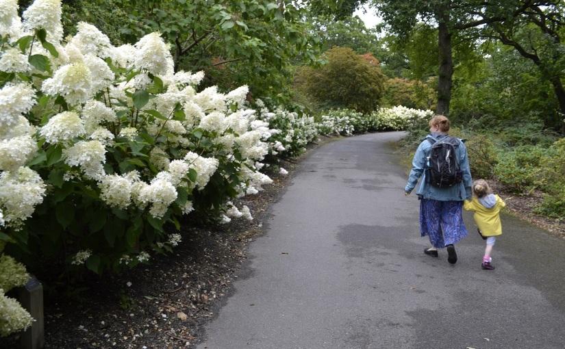 Six on Saturday: 17.8.19 Exbury Gardens Hydrangeasgalore