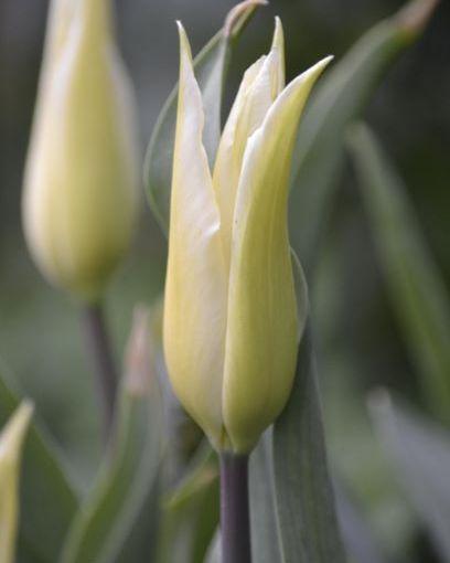 Six on Saturday: 26.10.19 Tulipfever