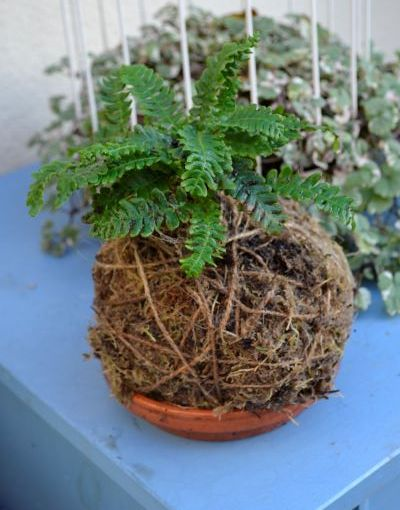 Turning Japanese: Making a kokedama