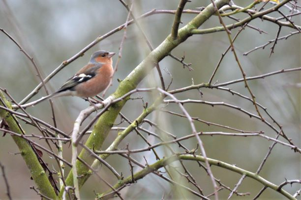 Six on Saturday: 6.2.21-Garden Birdwatch results