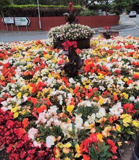 Environmental Gardening: BeddingPlants