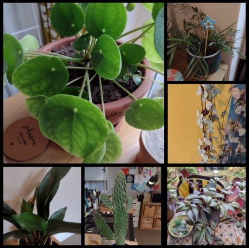 Six on Saturday: houseplants